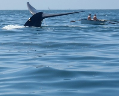 Blue whales feeding in local waters [PHOTOS]