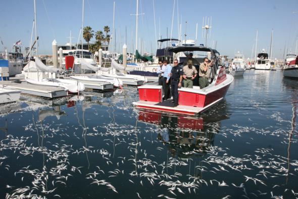 police sardines king harbor