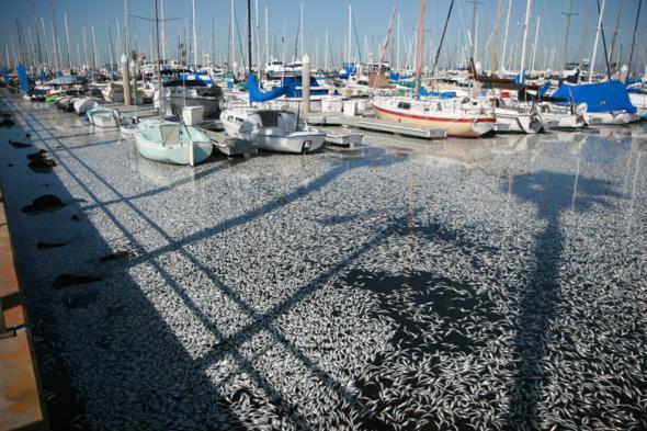 sardines king harbor