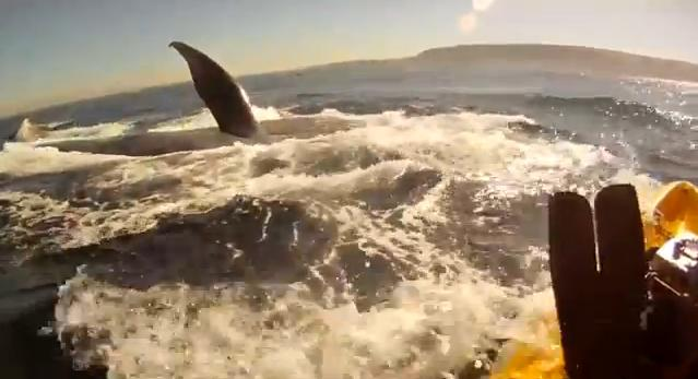 Kayaker dives with blue whales [VIDEO]