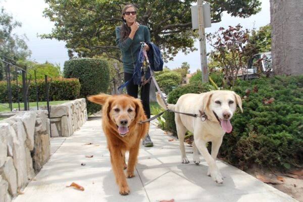 Vanessa Hughes, 25, has been walking dogs for Kathy's Dog Walking Service for two years. Photo by Alene Tchekmedyian