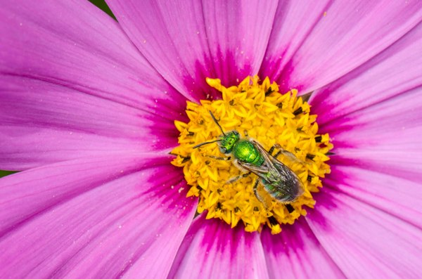 """""""Green Bee"""" by Mike Barbee"""