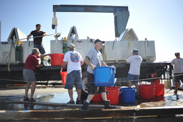 Volunteers did the process in reverse to set the fish free. Photo by Chelsea Sektnan