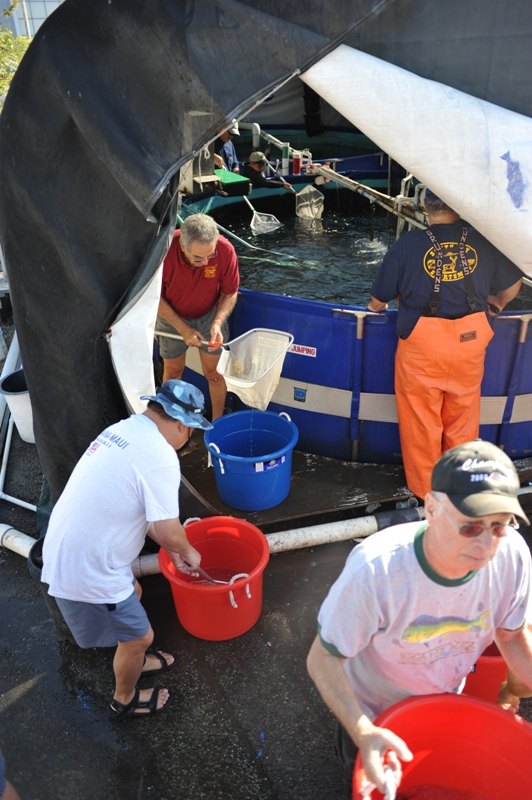Volunteers moved the fish from their holding tank 10 to a bucket until all 5,500 fish were moved to the ocean. Photo by Chelsea Sektnan