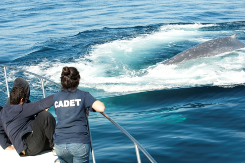 Naturalists welcome whale season