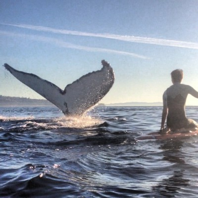 A whale fluke appears beside a paddleboarder off Redondo Beach in January. Photo by JR Simich