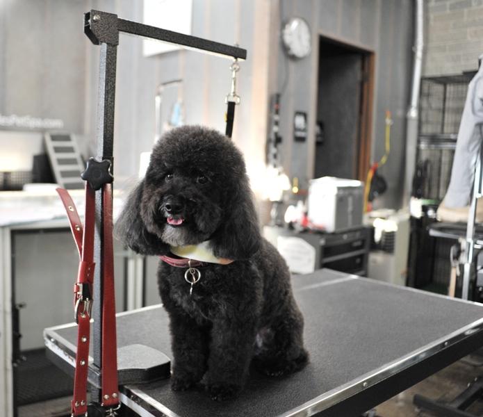 Best Pet Grooming: Bubbles Pet Spa