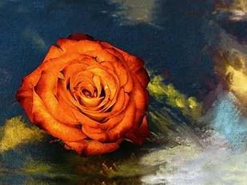 """""""Dramatic Rose,"""" by Janet Milhomme"""