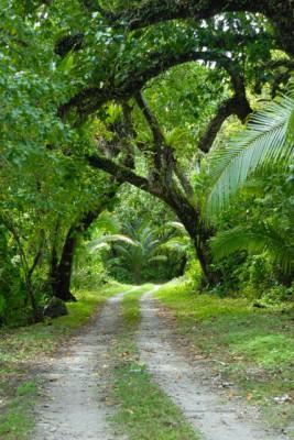 The main road in Atiu, Cook Islands. Photo by Noel Bartley