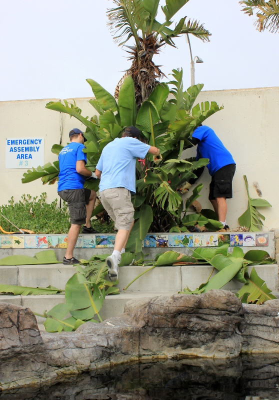 Volunteers work together to remove a tree at the SEA Lab on Saturday. Photo by Lauren Diethelm
