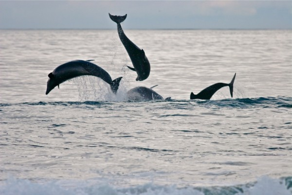 dolphins web
