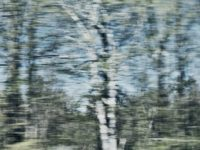 "Photographer Ariel Swartley talks about her work on Sunday from 12:30 to 1:30 p.m. in connection with PADA's ""Optic Nerve"" exhibition at Summer Studios Arts Academy, 2161 Lomita Blvd., Lomita. Pictured, ""Birch."" Information: (310) 377-8047 or (310) 591-7235."