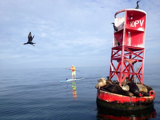 Rusty Doms and other wildlife at the R-10 Buoy. Photo by Brad Fyffe (aFyffe4Life)