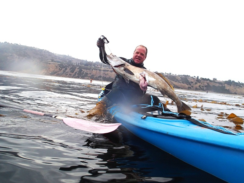 Kayak diver Mike D., of San Dimas, shows off the white sea bass he speared in the kelp beds off of Torrance Beach on Sunday morning. The Sea Lab at the AES Power Plant in Redondo Beach releases 45,000 white sea bass from its hatchery annually into the Santa Monica Bay. Each fish is tagged in the cheek. Fisherman who catch the fish are asked to send the tag and information about the fish to the SeaLab for its study. Photo by Kevin Cody
