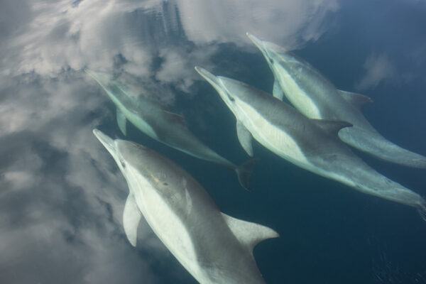 Dolphins By Michael McKinney