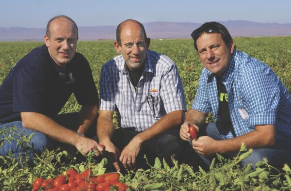 The Fresh Brothers' Goldberg brothers Adam, Scott and Michael checking out the tomatoes in Stanislaus County.