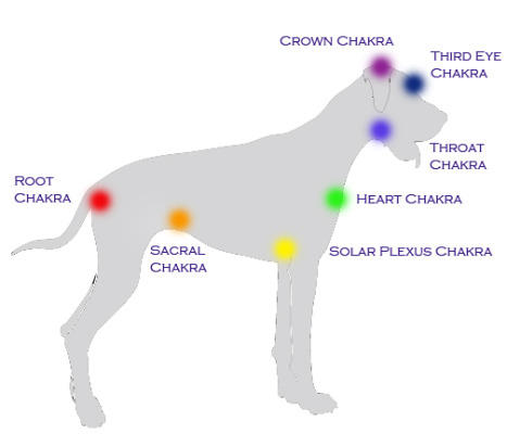 Animals, like humans, have seven chakras, or energy centers in the body. Clemens says that the root chakra is the most important in both animals and humans for its grounding effect. Courtesy of Redondo Beach Reiki