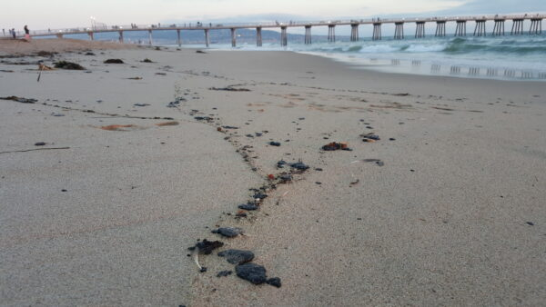 Hermosa Beach beaches were also closed because of what appeared to be tar that often washes up on local beaches following heavy winds from natural seepage about one mile off of Redondo Beach. Photo by Kevin Cody