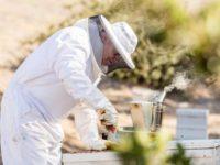 Ibarra among his bees. Photo courtesy of Terranea Resort.