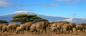 Kilimanjaro - A Presentation by Marty Haupt @ Community Room of the Palos Verdes Library | Rolling Hills Estates | California | United States