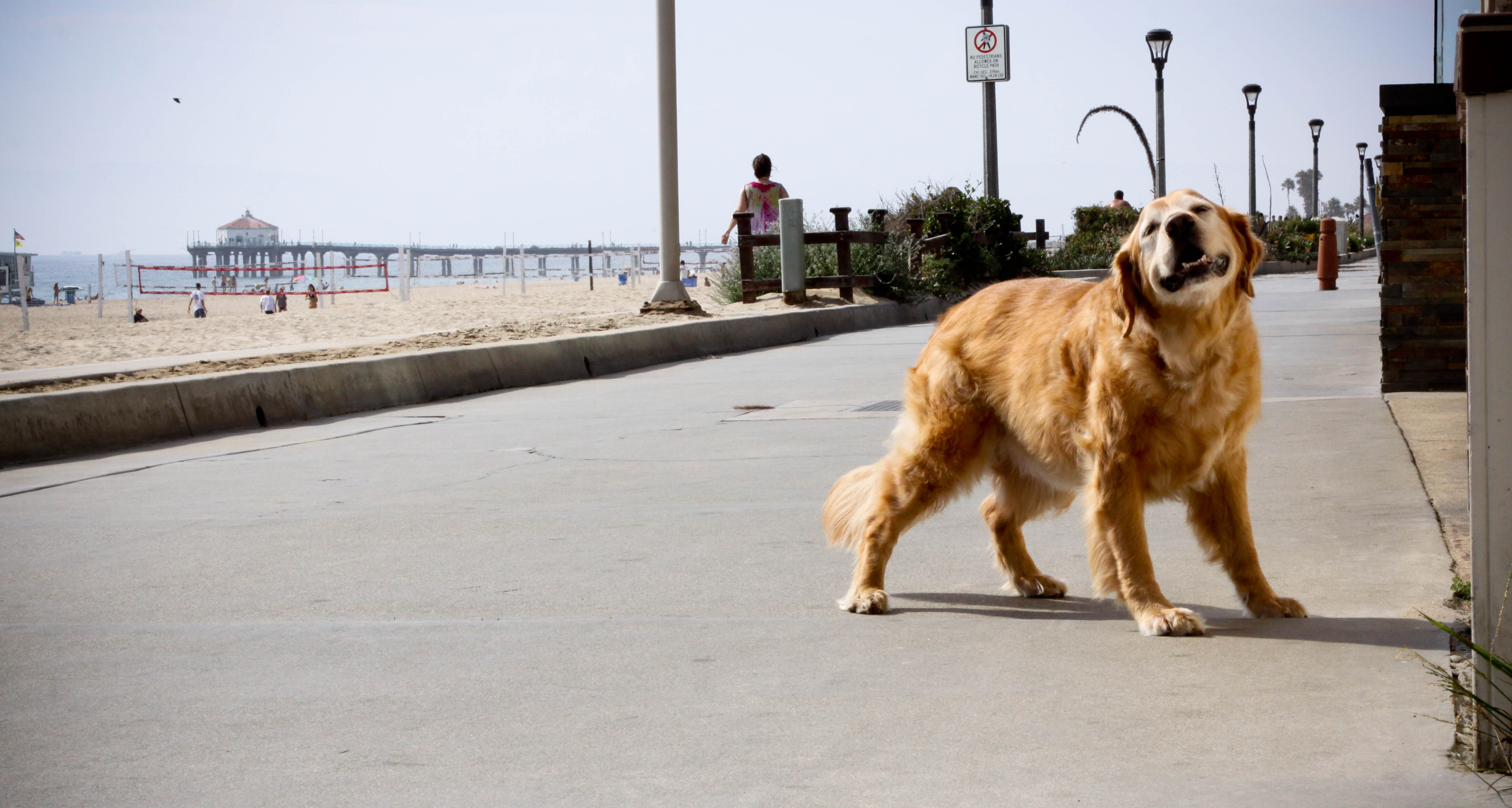 Saying goodbye to Carly, Hermosa Beach's canine 'Greeter of Neptune'