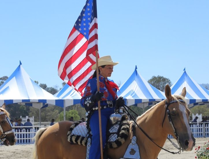 Spotlight on the hill – National horse show