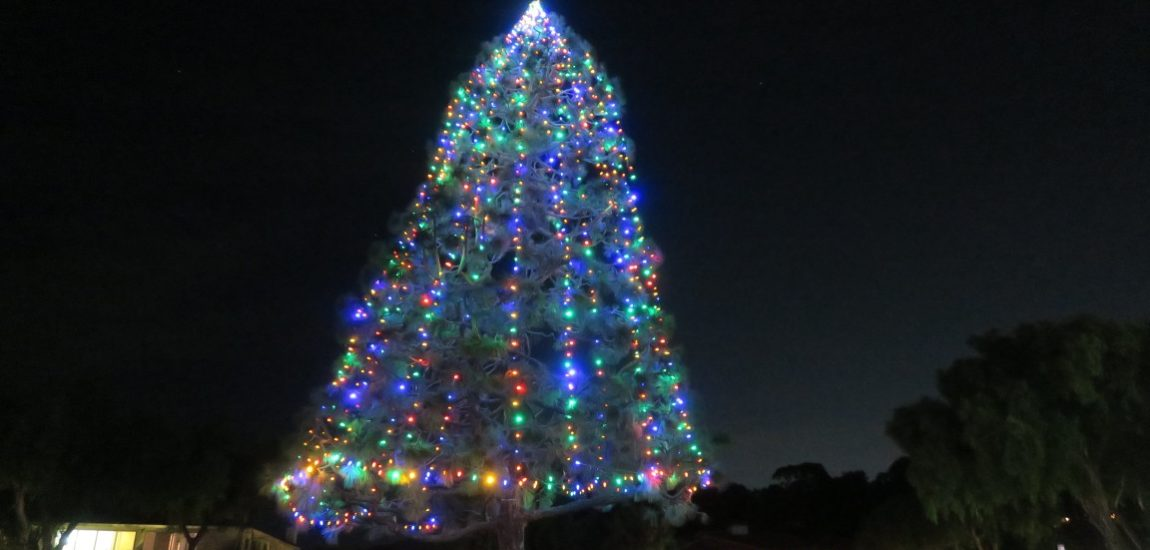 Spotlight on the hill – Malaga Cove Tree Lighting
