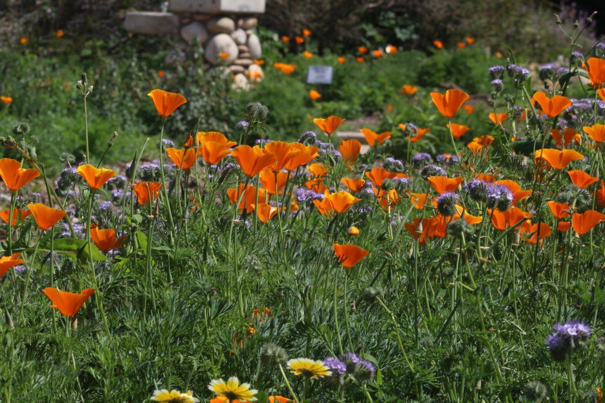 Manhattan beach about town easy reader news - Manhattan beach botanical garden ...
