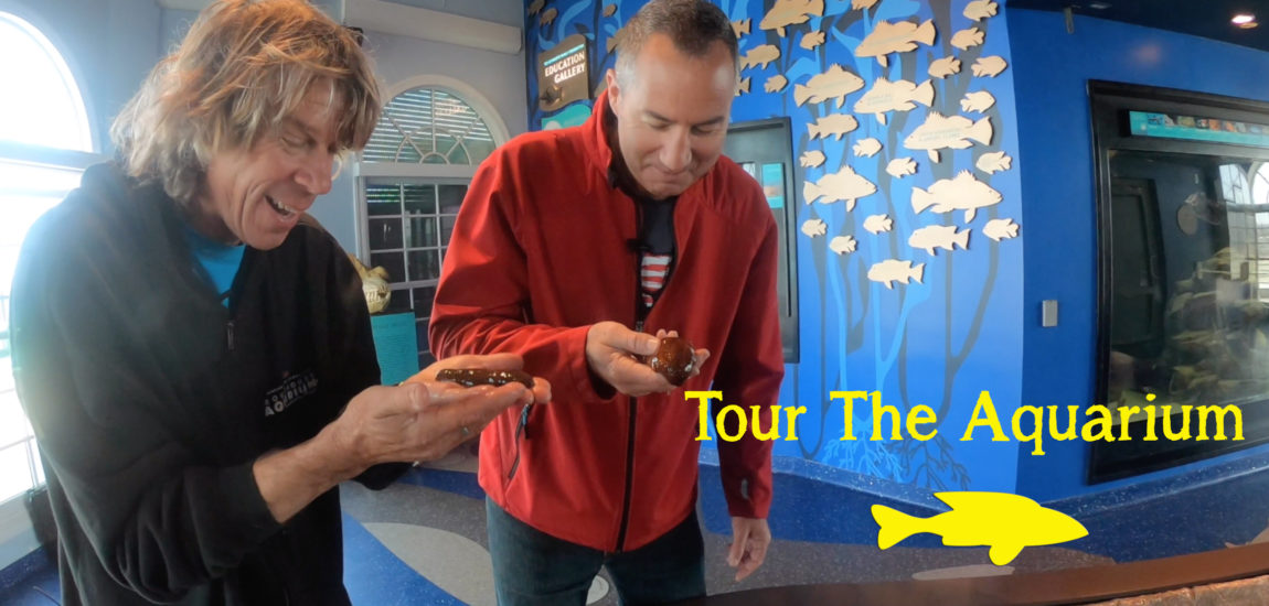 Tour the Manhattan Beach Roundhouse Aquarium (video)