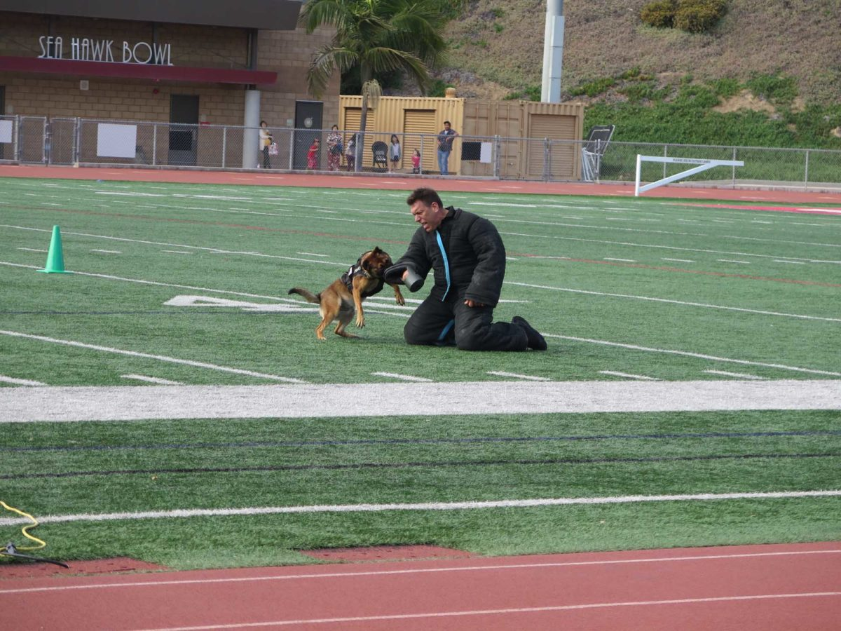Redondo Beach K9 officers and human partners show their skills