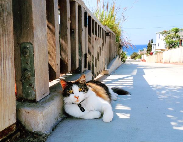Walk Street Cat 9-20-13